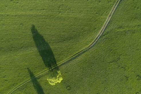 Aerial view of tree and dirt road through meadow Bavaria, Germany. - RUEF02283