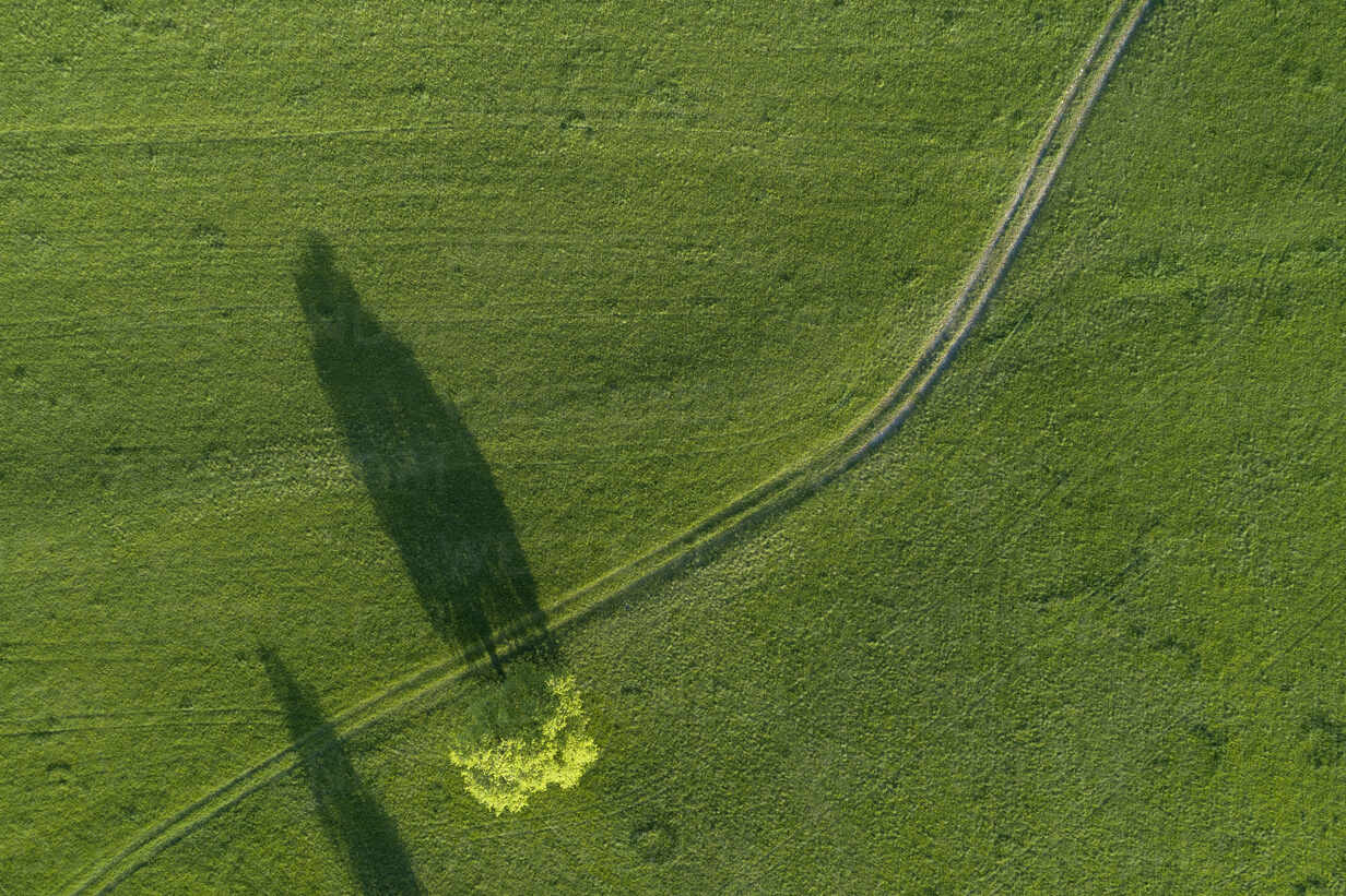 Aerial view of tree and dirt road through meadow Bavaria, Germany. - RUEF02283 - Martin Rügner/Westend61
