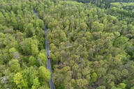 Aerial view of road through forest, springtime, Steigerwald, Franconia, Bavaria, Germany - RUEF02295