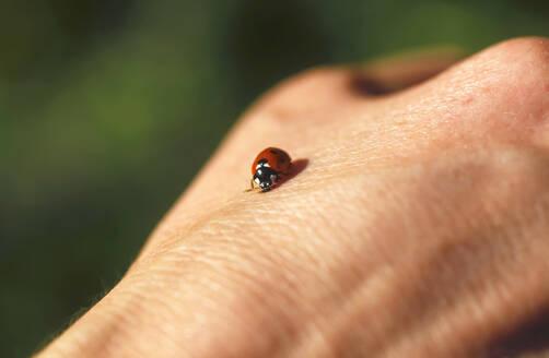 Ladybird on woman's hand - JTF01275