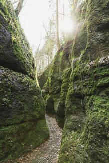 Drachenschlucht, Thuringian Forest, Eisenach, Germany - GWF06181