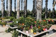 Assortment of flowers in a garden center - JRFF03454