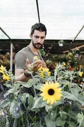Worker in a garden center checking a sunflower - JRFF03481