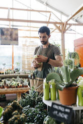 Worker in a garden center holding a maintenance product for cacti - JRFF03484