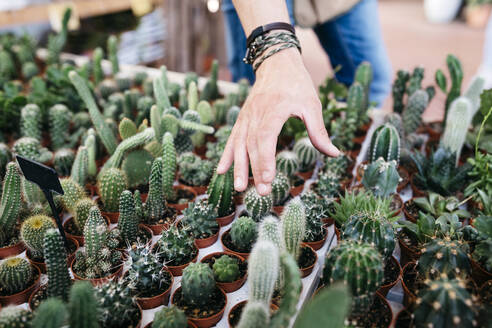 Spain, Tarragona. Hand worker wanting to grab a cactus - JRFF03493