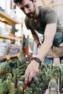 Worker in a garden center picking up a cactus - JRFF03496