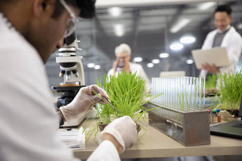 Male environmental scientist examining plant in laboratory - HEROF37365