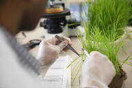 Close up male environmental scientist examining plant in laboratory - HEROF37368