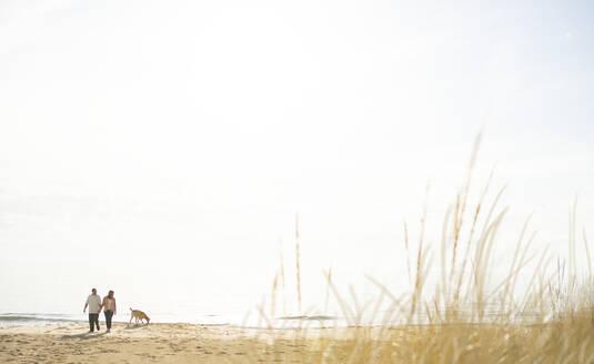 Caucasian couple walking dog on beach - BLEF13162