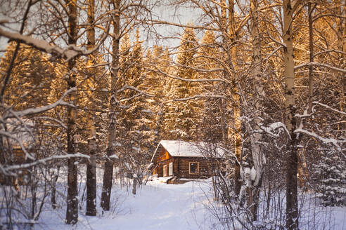 Log cabin in snowy forest - BLEF13402