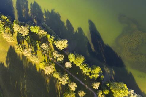 Feldweg und Baumreihen am Ufer, Schattenwurf, Riegsee, Das Blaue Land, Oberbayern, Bayern, Deutschland - LHF00661