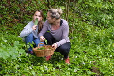 Mother and daughter picking wild garlic - LBF02646