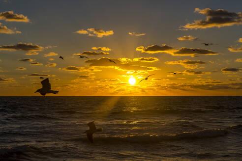 Möwen, Sonnenaufgang, Miami Beach, Florida, USA, Nordamerika - MABF00541