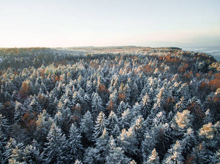 Aerial view of snowy forest on the coast of Estonia. - AAEF00887