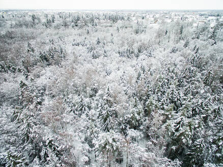 Aerial view of snowy forest in Estonia. - AAEF00896