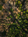 Aerial view of a forest during fall season in Estonia - AAEF00905
