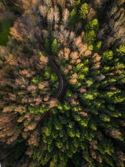 Aerial view of a forest during fall season in Estonia. - AAEF00905