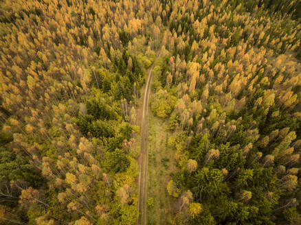 Aerial view of an empty straight road crossing a colorful forest in Estonia. - AAEF00944