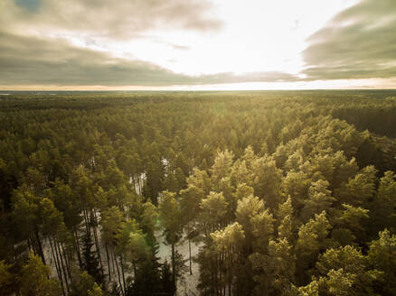 Aerial view of a bright sky and a snowy forest in Estonia - AAEF00947