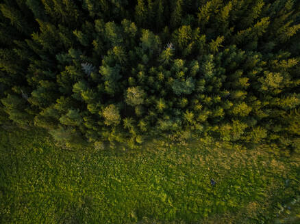 Aerial view of the forest on Island Vormsi, Estonia. - AAEF00998