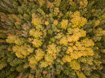 Aerial view of colorful forest in Estonia. - AAEF01025