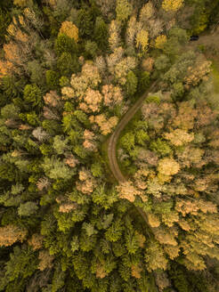 Aerial view of a curvy empty road crossing a colorful forest in Estonia. - AAEF01028