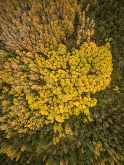 Aerial view of colorful forest in Estonia. - AAEF01034