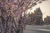 Cherry tree on sidewalk against Speicherstadt in city during sunset at Hamburg, Germany - KEBF01297