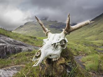 Close-up of deer skull on rock against cloudy sky, Scotland, UK - HUSF00056