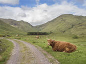 Highland cattle sitting on grassy land against cloudy sky, Scotland, UK - HUSF00062