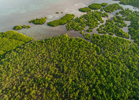 Aerial abstract view of mangroves by the coast in Taloto district, Philippines - AAEF01827