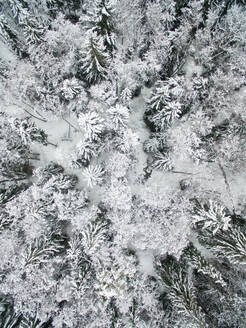 Aerial view of snowy forest in Estonia. - AAEF02128