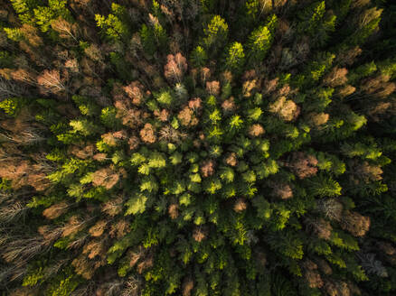 Aerial view of a forest during fall season in Estonia - AAEF02146