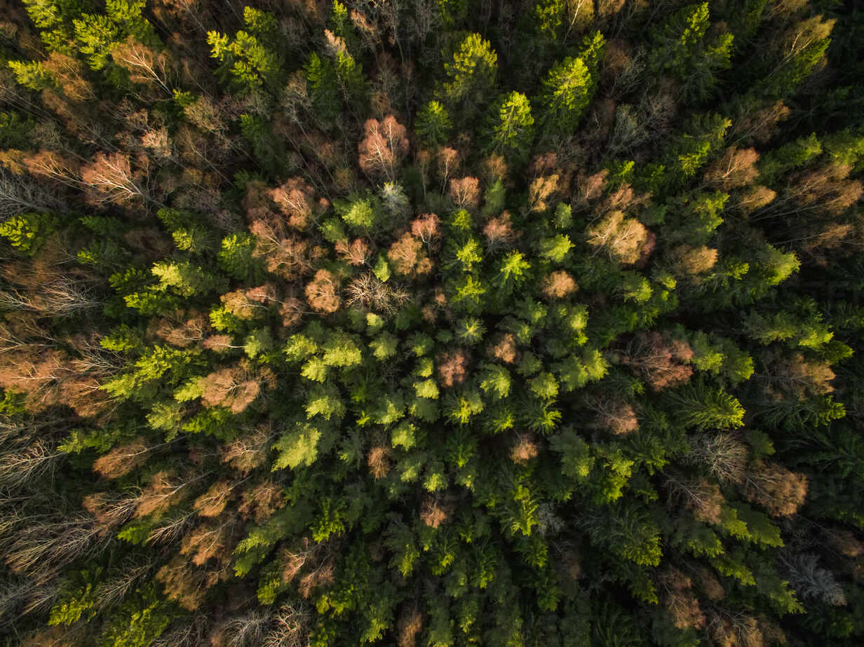 Aerial view of a forest during fall season in Estonia. - AAEF02146 - Amazing Aerial/Westend61
