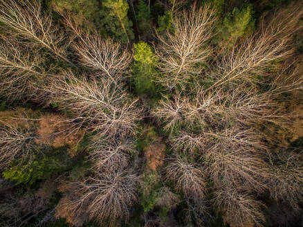 Aerial view of a forest during fall season in Estonia. - AAEF02149