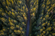Aerial view of a road in the middle of the nordic pines forest in Estonia - AAEF02212