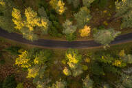 Aerial view of an empty road crossing the nordic colorful forest at fall in Estonia - AAEF02224