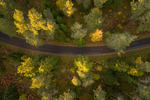 Aerial view of an empty road crossing the nordic colorful forest at fall in Estonia. - AAEF02224