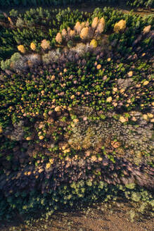 Aerial view of colorful forest in Marimetsa natural reserve in Estonia - AAEF02233