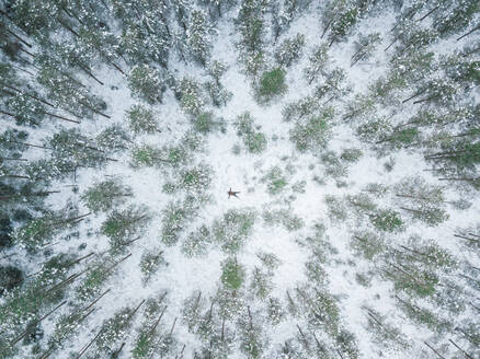 Aerial view of a person lying in the middle of the snowy forest in Polliku in Estonia - AAEF02475