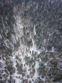 Aerial view of a snowy forest in nordic landscape of Estonia - AAEF02484