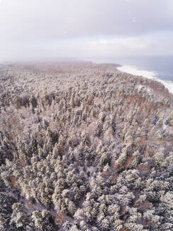 Aerial view of the snowy colorful forest on the coast of Muraste in Estonia - AAEF02505