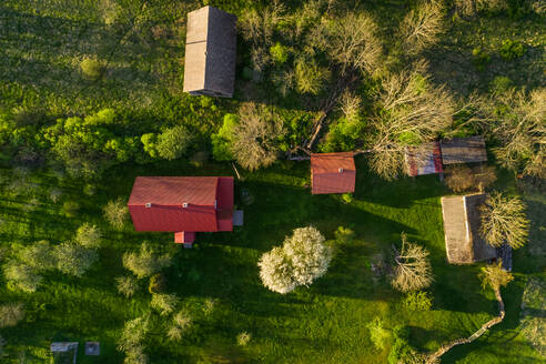 Aerial view village surrounded by fields on Forby on Vormsi island, Estonia - AAEF02562