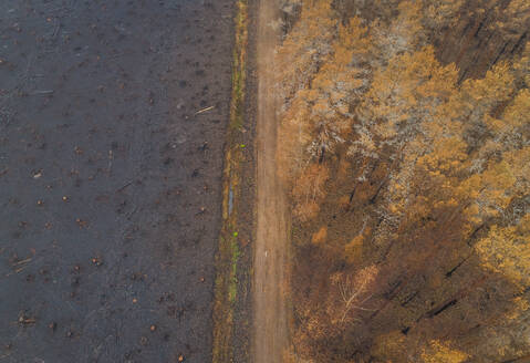 Aerial view dirty road going through field in Estonia - AAEF02616