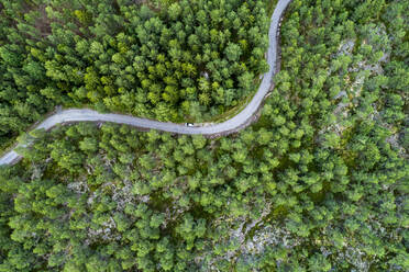 A road in the forest in the Graensoe in West Sweden - TAMF02148