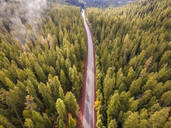 Aerial view of a road crossing the forest in Oregon, USA - AAEF03038