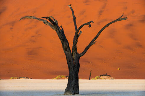 Dead acacia tree silhouetted against sand dunes at Deadvlei, Namib-Naukluft Park, Namibia, Africa - RHPLF01238