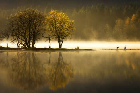 Autumn at Loch Ard, Trossachs National Park, Stirling Region, Scotland, United Kingdom, Europe - RHPLF03075