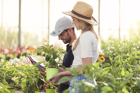 Young woman and man working with tablet in a greenhouse - JSRF00562