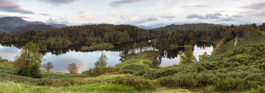 Tarn Hows near Hawkshead, Lake District National Park, UNESCO World Heritage Site, Cumbria, England, United Kingdom, Europe - RHPLF04629